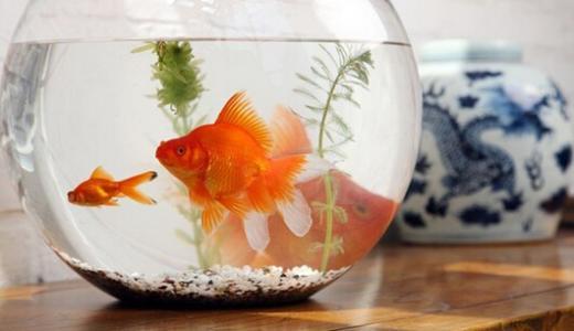 新手饲养鱼常见11项错误